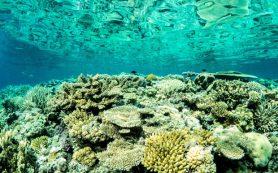 Большому Барьерному рифу оставили шанс на спасение