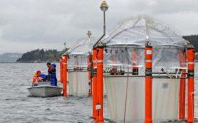 Повышение кислотности океана ударит по всем морским экосистемам
