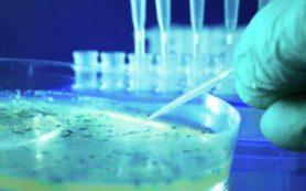 Ученые ИТМО создали компьютерный алгоритм, который позволяет быстро находить гены «супербактерий» в ДНК микрофлоры кишечника