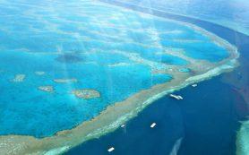 Упадок кораллов начался более ста лет назад