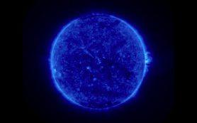 Синее Солнце затмило разум