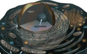 Открытие биолога из России может переписать историю эволюции многоклеточных