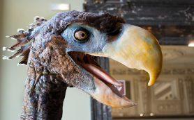 Ископаемые птицы-великаны оказались родственниками