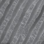 Изотопы кальция и магния помогли уточнить температуру океана в эоцене