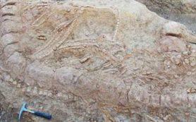 В Индии найден хорошо сохранившийся скелет ихтиозавра