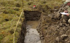 Запасы лигнина в почвах вечной мерзлоты станут доступными для разложения при потеплении климата