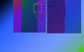 Механическая модель объяснила ровную границу между биологическими тканями