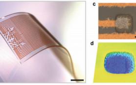 Эластичные биосовместимые электроды проследили за активностью мозга