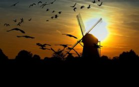 «Акустические маяки» смогут предотвратить столкновения птиц со зданиями