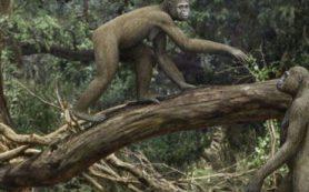 Ардипитеки умели ходить и лазать по деревьям одинаково хорошо