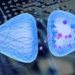 Ученые ИОФХ КазНЦ РАН создали препарат, способный подавлять миастению