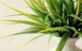 Правильные комнатные растения очищают воздух и сохраняют энергию