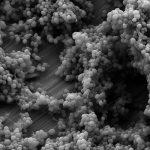 Кожные бактерии защищают от рака