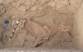 Палеонтологи изучают останки древней лошади, найденные в долине Нила
