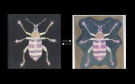 Фотонные кристаллы заставили искусственный краситель менять цвет при смене фона