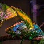 Ученые из США создали нанолазер, который меняет цвета, подобно хамелеону