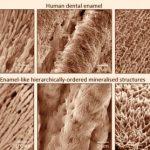 Ученые разрабатывают новые минерализованные материалы, которые могут восстанавливать зубную эмаль