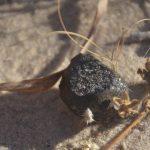 Фрагмент астероида, упавшего на Землю, обнаружен в Ботсване
