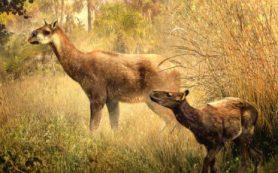 Палеонтологи открыли два новых вида копытных млекопитающих эпохи миоцена