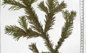 Химики МГУ научились легко определять полезность лекарственных растений