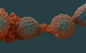 Как остановить рак без вреда для здоровых клеток