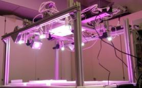 Ученые из Сколтеха научились предсказывать динамику роста растений