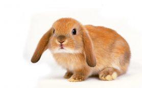 Почему домашние кролики не боятся людей
