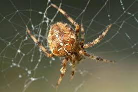 Яд паука поможет остановить гибель нервных клеток