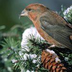 Как птицы чувствуют магнитное поле