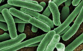 Могут ли пробиотики быть вредными?