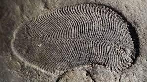 Древнейшие ископаемые оказались животными