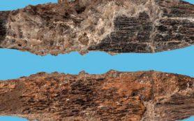 В Африке обнаружили древнейший костяной нож специального назначения