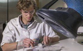Российские и зарубежные палеонтологи обнаружили в России органические следы древнейшего животного Земли