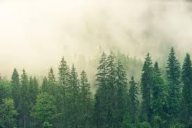 Цементный завод доставляет неприятности сосновому лесу