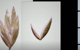 Ученые из США разработали новый метод создания 3D-изображений мельчайших структур растений