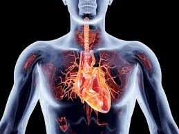 Долгоживущий протез для сердца