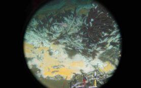 Ученые обнаружили новые виды микробов, которые питаются парниковыми газами