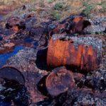 Российские ученые выделили бактерии, которые могут помочь в очистке Арктики от нефтяных отходов