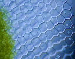 Чувство верха и низа у растительных клеток передаётся по наследству