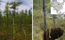 После пожара экосистемы северной тайги в Сибири восстанавливаются дольше ста лет