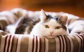 Домашние животные против аллергии
