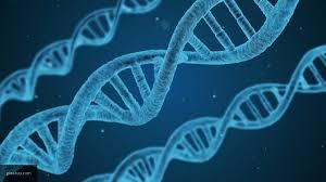 Генетическому алфавиту удвоили число букв