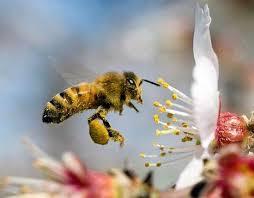 Пчелам мешают их собственные танцы