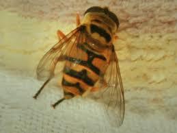Пчёлы и рыбы пообщались через переводчика