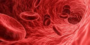 Физические упражнения активируют тромбоциты