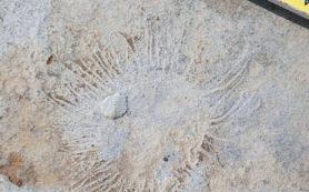 В ИНГГ СО РАН изучают ископаемые организмы, жившие в Якутии миллионы лет назад