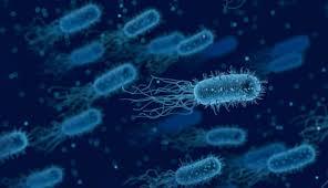 Как бактерии проводят электричество