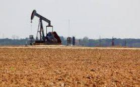 Чтобы узнать состав нефти, нужно растворить её в воде