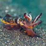 Головоногие моллюски все чаще занимают место лабораторных мышей