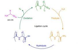 Химики синтезировали пептиды в условиях ранней Земли